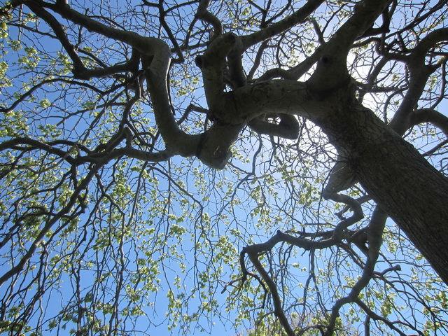 tree-underneath.jpg - large