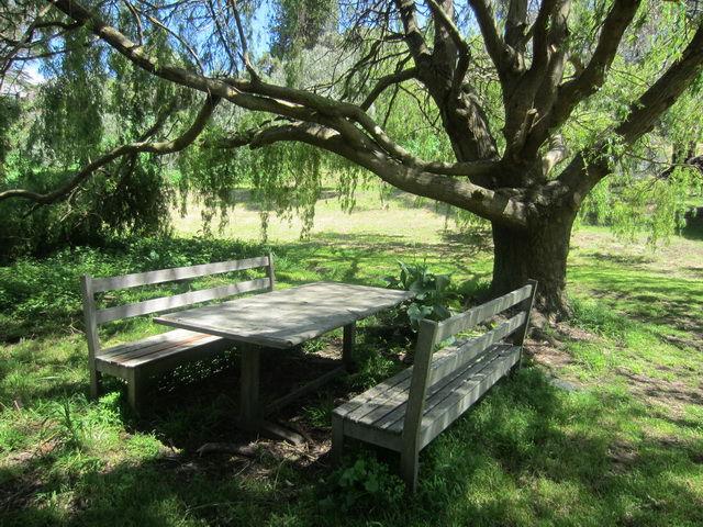 willow-tree.jpg - large